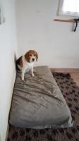 Ferienhunde